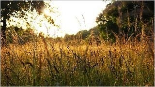 grasslands-wallpaper-collection-series-two-11
