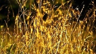 grasslands-wallpaper-collection-series-two-13