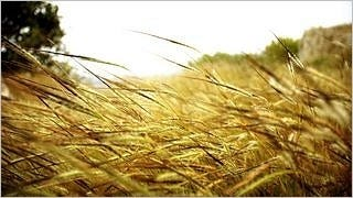 grasslands-wallpaper-collection-series-two-14