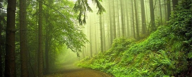 foggy-mornings-wallpaper-collection-series-two-00