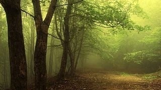 foggy-mornings-wallpaper-collection-series-two-04