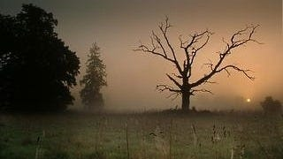 foggy-mornings-wallpaper-collection-series-two-05