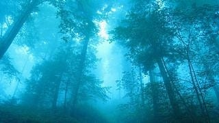 foggy-mornings-wallpaper-collection-series-two-06