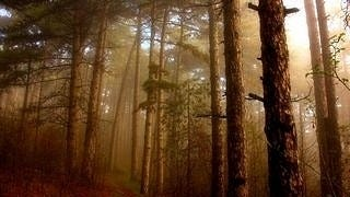 foggy-mornings-wallpaper-collection-series-two-07