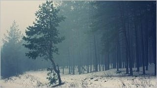 foggy-mornings-wallpaper-collection-series-two-11