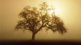 foggy-mornings-wallpaper-collection-series-two-14