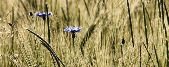 grasslands-wallpaper-collection-series-two-00