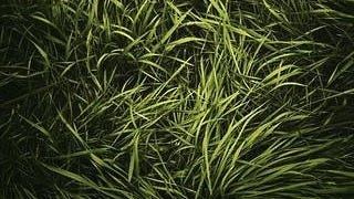 grasslands-wallpaper-collection-series-two-02