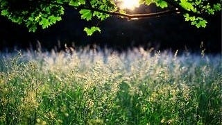 grasslands-wallpaper-collection-series-two-03