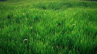 grasslands-wallpaper-collection-series-two-05