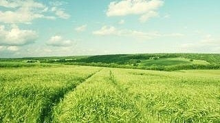 grasslands-wallpaper-collection-series-two-06