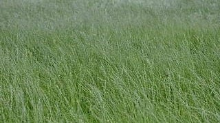 grasslands-wallpaper-collection-series-two-07