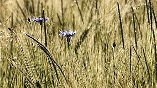 grasslands-wallpaper-collection-series-two-08