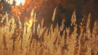 grasslands-wallpaper-collection-series-two-15