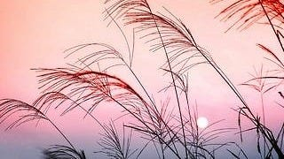 grasslands-wallpaper-collection-series-two-16