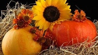thanksgiving-day-2012-wallpaper-collection-bonus-edition-08