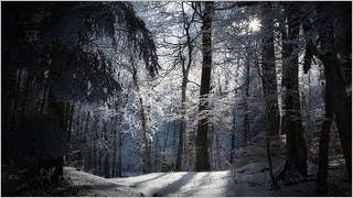 winter-2012-wallpaper-collection-bonus-size-15