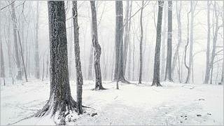 winter-2012-wallpaper-collection-bonus-size-07