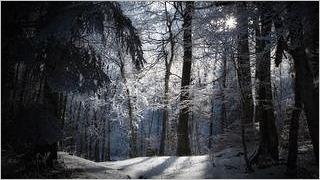 winter-2012-wallpaper-collection-bonus-size-15