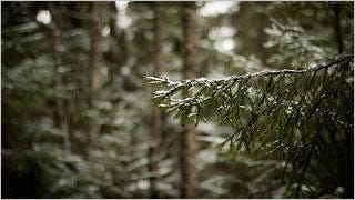 snow-covered-trees-wallpaper-collection-series-two-02
