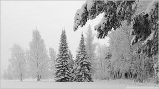 snow-covered-trees-wallpaper-collection-series-two-05