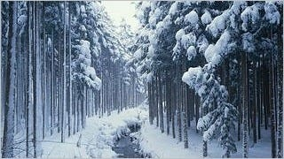 snow-covered-trees-wallpaper-collection-series-two-06