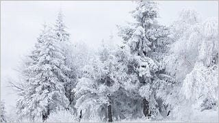 snow-covered-trees-wallpaper-collection-series-two-07