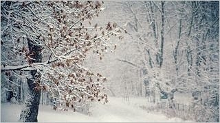 snow-covered-trees-wallpaper-collection-series-two-08
