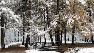 snow-covered-trees-wallpaper-collection-series-two-11