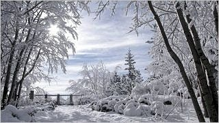 snow-covered-trees-wallpaper-collection-series-two-13