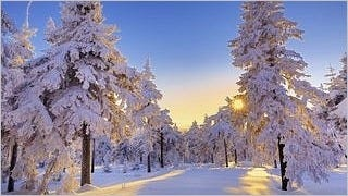 snow-covered-trees-wallpaper-collection-series-two-14