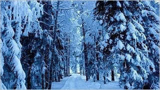 snow-covered-trees-wallpaper-collection-series-two-15