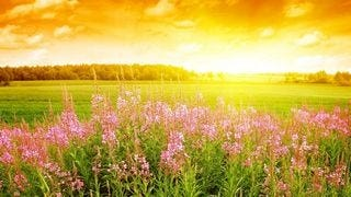 meadows-wallpaper-collection-series-two-05