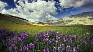 meadows-wallpaper-collection-series-two-15