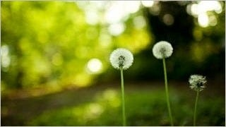 spring-2013-wallpaper-collection-02
