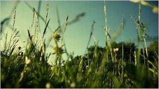 spring-2013-wallpaper-collection-03