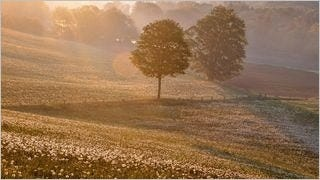 spring-2013-wallpaper-collection-05