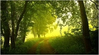 spring-2013-wallpaper-collection-08