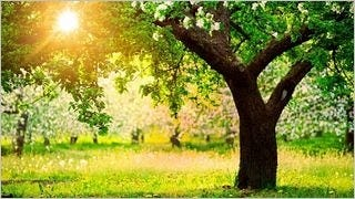 spring-2013-wallpaper-collection-09
