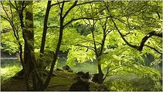 spring-2013-wallpaper-collection-13
