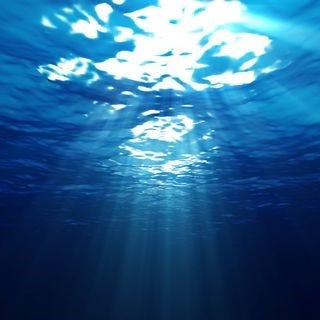 under-the-sea-wallpaper-collection-series-one-11