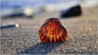 seashells-wallpaper-collection-series-two-04
