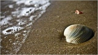 seashells-wallpaper-collection-series-two-09