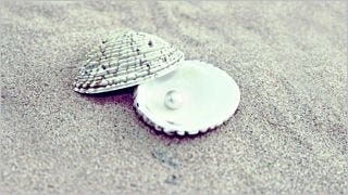 seashells-wallpaper-collection-series-two-12