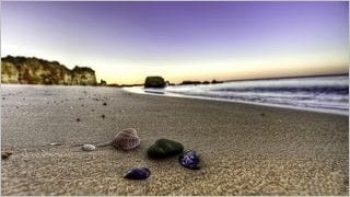 seashells-wallpaper-collection-series-two-14