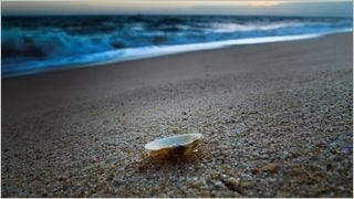 seashells-wallpaper-collection-series-two-16