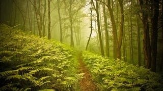 wilderness-pathways-wallpaper-collection-series-two-01
