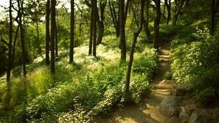 wilderness-pathways-wallpaper-collection-series-two-02