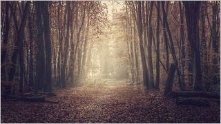wilderness-pathways-wallpaper-collection-series-two-08