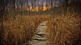 wilderness-pathways-wallpaper-collection-series-two-09